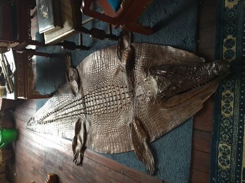 Platte krokodil in de woonkamer in Den-Haag