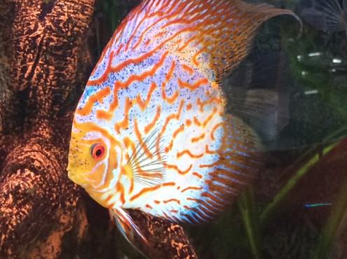 Vissen gered tijdens woningontruiming